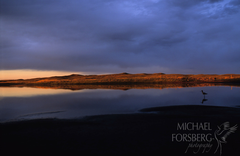 Avocet on lake at sunset.  Nebraska sandhills.