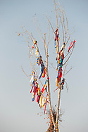 Sun Dance pole, Crow Fair, Crow Indian Reservation, Montana
