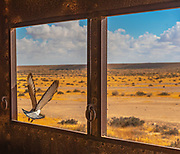 Negev Desert landscape as seen through a window in an abandoned building, with a pigeon flying away, Negev, Israel