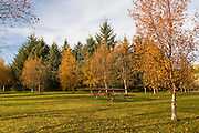 A bench inbetween trees in autumn