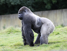 AUG 13 2014 Port Lympne animal Park