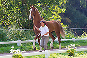 Ana Cristina Guerreiro, (POR), Adamastor Pabiola, Armani Pabiola, Millos, Xangai Pabiola, Zo Weg V - Horse Inspection Driving - Alltech FEI World Equestrian Games™ 2014 - Normandy, France.<br /> © Hippo Foto Team - Leanjo de Koster<br /> 25/06/14