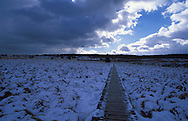 BEL, Belgium, winter at the high-moor Hohes Venn....BEL, Belgien, das Hochmoor Hohes Venn, das verschneite Venn im Winter........