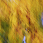 """Swirling Autumn <br />