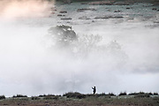 UNITED KINGDOM, London: 12 May 2020 <br /> A walker stops to take a pictures of a frosty Richmond Park early this morning. The weather in the capital, although starting sunny and cold today, is set to be cloudy for the rest of the week.