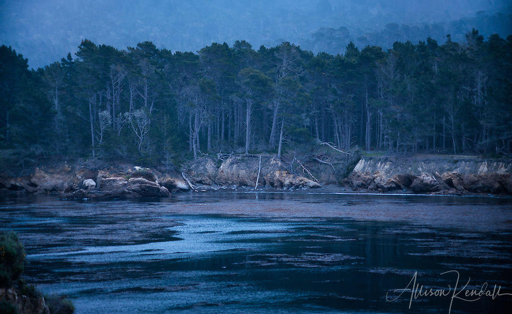 Dusk settles over a quiet cove at Point Lobos State Natural Reserve in Monterey, California