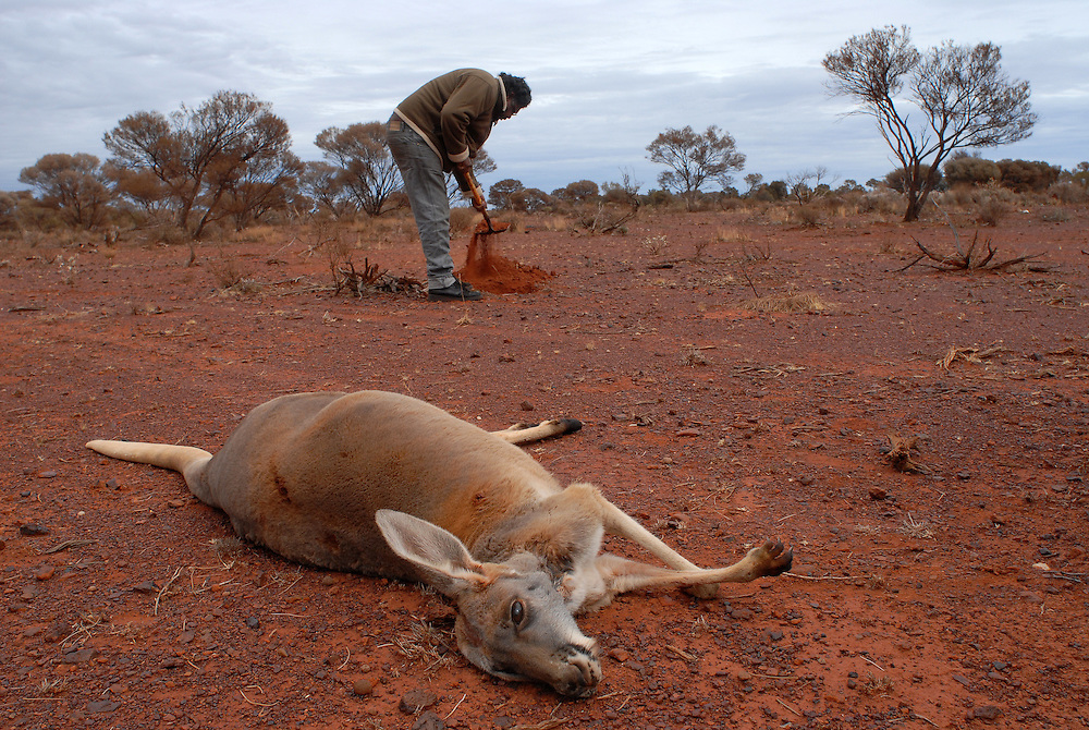 Bush Tucker, Kangaroo shoot - Local Aboriginal men, Isaac Green and Bradley Stokes, shoot roos for a feast at a Laverton sporting event. Out bush they prepare the fire pit needed to cook the roo. 09 September 2006