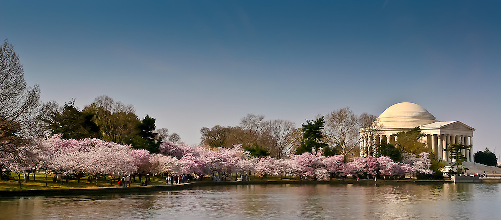 The Tidal Basin explodes with cherry blossoms.