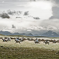 horses and cowboy, house round up on the blackfeet reservation, montana, usa, north american indain days