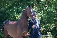 Juan Antonia Real Garcia, (ESP), Bamaro, Corne, Polo, Vitales, Wanted - Horse Inspection Driving - Alltech FEI World Equestrian Games&trade; 2014 - Normandy, France.<br /> &copy; Hippo Foto Team - Leanjo de Koster<br /> 25/06/14