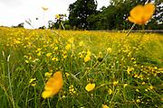 A view of the fields around the Caulfield/Mulryan family reunion at Ardenode Stud, County Kildare, Ireland on Sunday, June 23rd 2013. (Photo by Brian Garfinkel)