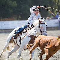 A breakaway roping contestent tries to rope a steer after he chases after it.