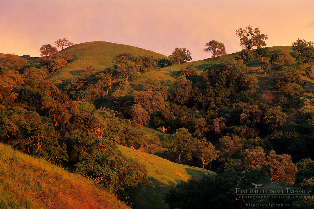 Sunset light on oak covered hills, Mt. Diablo State Park, Contra Costa County, CALIFORNIA