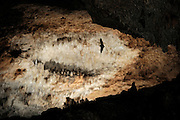 Schreiber's long fingered bat (Miniopterus schreibersi) - Grotta Monte Majore, Sardinia, Italy