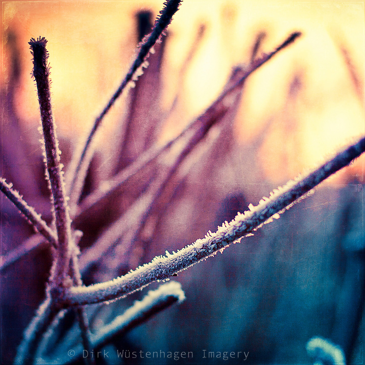 Hoar frost on twigs at sunrise. Texturized photograph