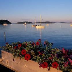 Bar Harbor and a box of petunias. Bar Harbor, ME