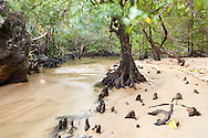 Sous bois dans le parc national de Masoala, Madagascar