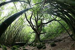 Bamboo Forest Napali Coast