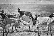 A donkey ride