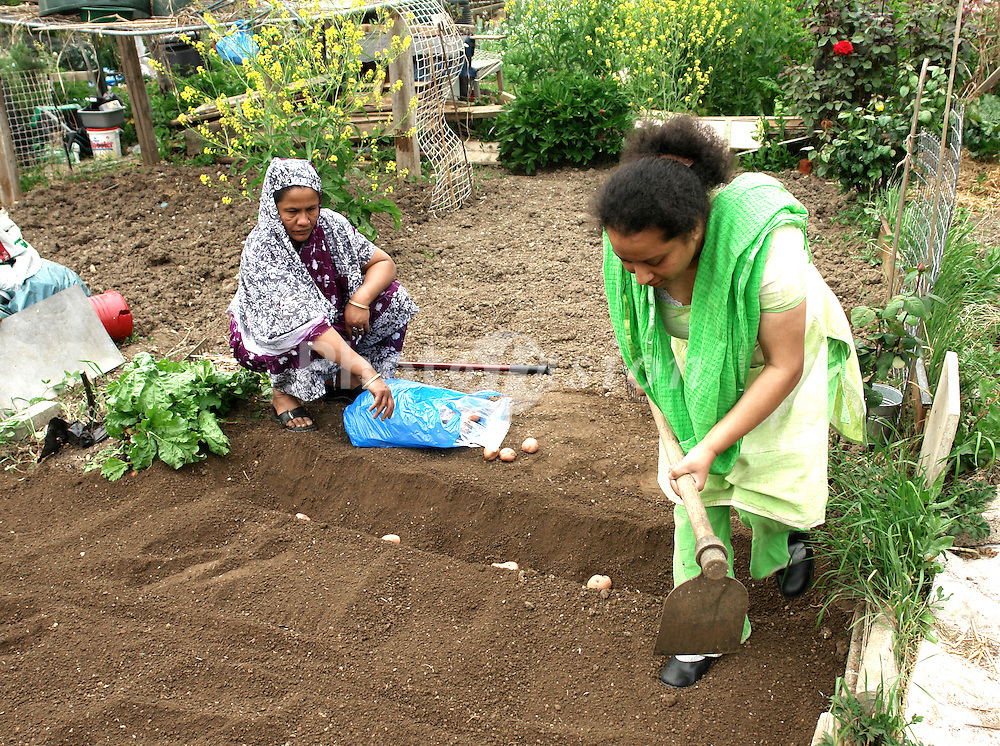 Cable Street community gardens; allotment associations in Bow; Tower Hamlets