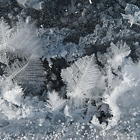 frozen snow flakes on ice