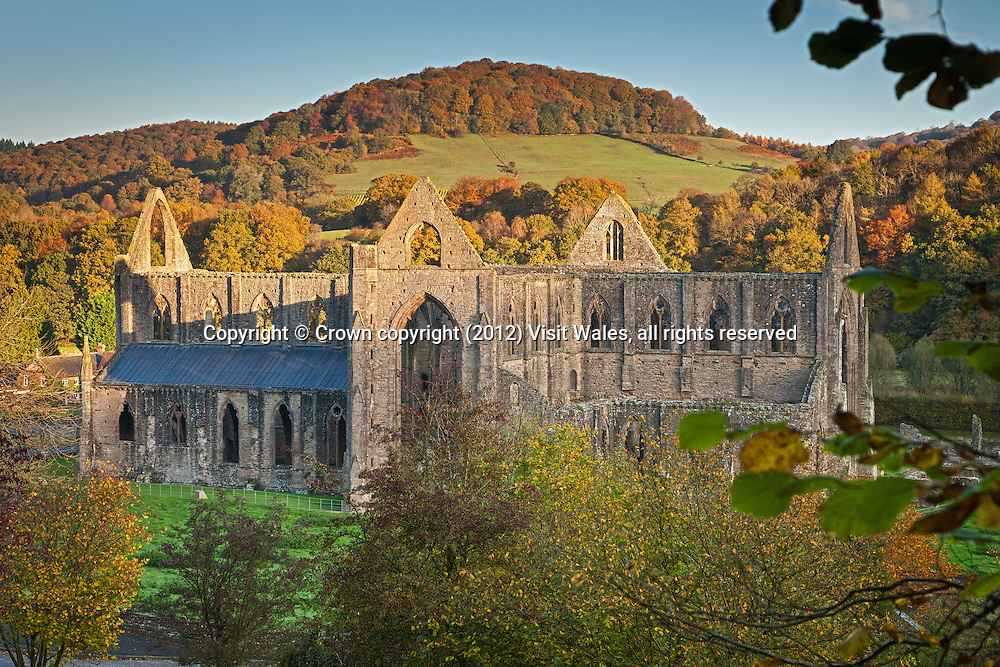 General view at dawn in autumn from south east<br /> Tintern Abbey <br /> Cadw Sites<br /> SAMN: MM102<br /> NGR: SO533000<br /> Monmouthshire<br /> South<br /> Abbeys<br /> Medieval<br /> Religious, Ritual and Funerary<br /> Historic Sites