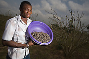 Farm worker Thomas Kavi holds a bucket filled with dried jatropha fruits as he stands amid jatropha plants at the farm where he works in the town of Lolito, roughly 80km east of Ghana's capital Accra, on Thursday Dec. 12, 2006. Jatropha - which grows naturally in Ghana and other parts of Africa - can be used to make biodiesel.<br />