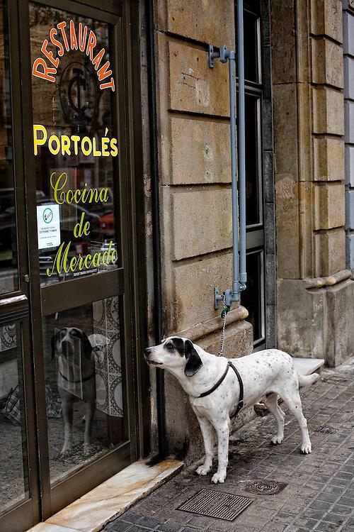 Barcelona, Catalunya, Spain.<br /> A dog waiting at the door of a restaurant.<br /> &copy;Carmen Secanella