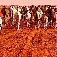 Caravan in the Sahara desert in Mauritania