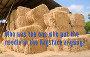 Famous humourous quotes series: Who was the one who put the needle in the haystack anyway?