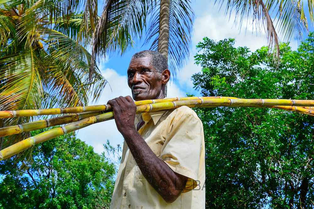 Sugar Cane Farmer on Marie-Galante, where a few of Guadeloupe's best rhum distilleries are based