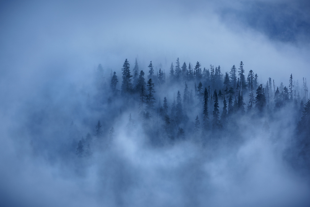 A view from above the clouds looking down on old growth forest in Olympic National Park, WA USA
