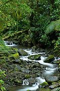 Stream at cloud forest, La Amistad international park, Chiriqui province,Panama,central America