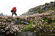 Female backpacker with wildflowers in the foreground. High Sierra backpacking trip to Garnet Lake and Nydiver Lake in the Ansel Adams Wilderness out of Devil's Postpile national monument 2017.