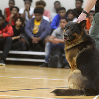 Jabbo, a German Shepherd K-9 Officer with the Tupelo Police Department, is held by his handler, K-9 Officer Ken Soderstrom during a visit to the Tupelo Police Athletic League to talk with a group of Tupelo Middle and High School students.