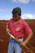 Gay and Robinson Plantation, Kauai, Hawaii, (editorial use only)<br />