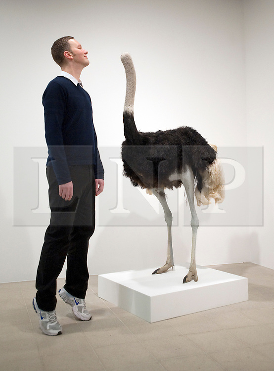 © London News Pictures. 31/01/2012. Artist David Shrigley poses next to artwork titled 'Ostrich (2009)' a taxidermied headless ostrich at a press viewing of exhibition 'Brain Activity, by British artist David Shrigley at the Hayward Gallery, London on January 31st, 2012. Photo credit: Ben Cawthra/LNP
