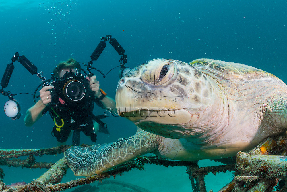 Photographer and a Green Turtle, Chelonia mydas, Mabul, Sabah, Malaysia, Borneo, Celebes Sea,
