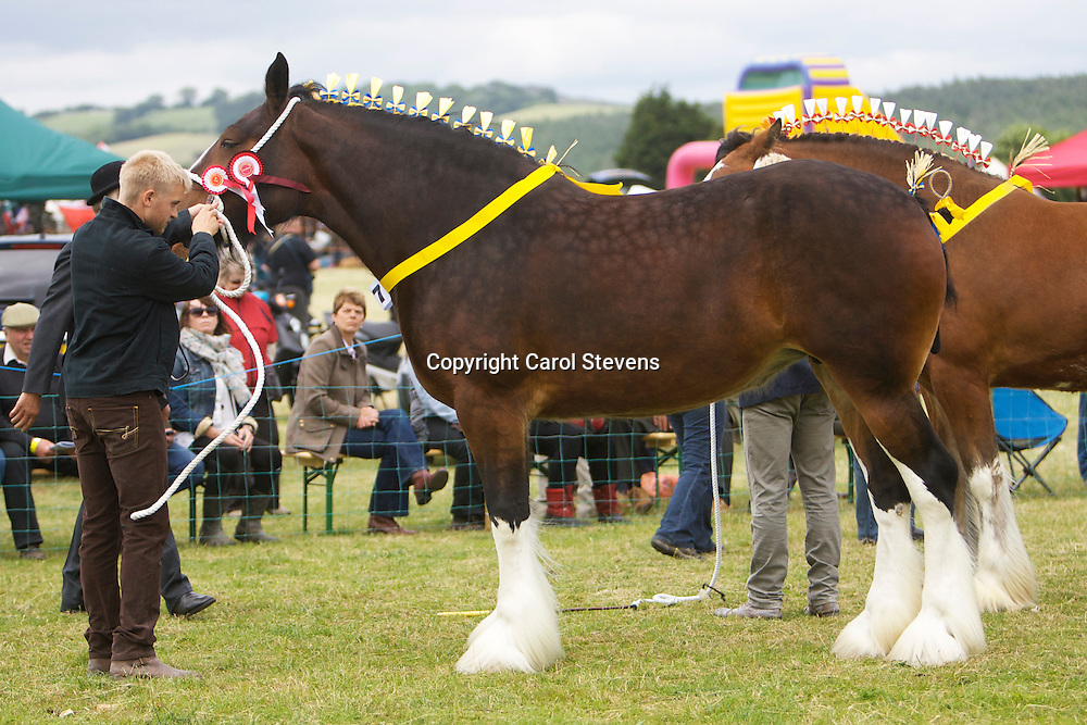 Matthew Bedford and Phoenix Gemma<br />