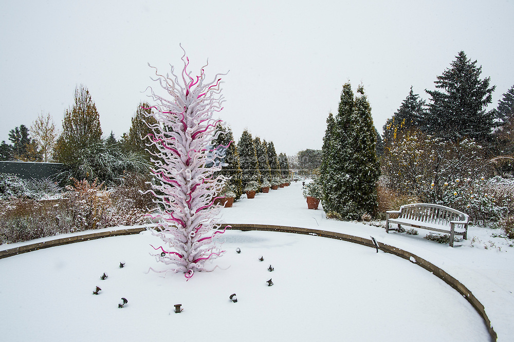 chihuly in the snow