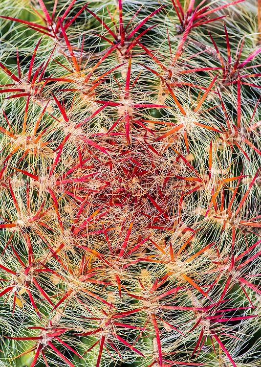 Close up of a barrel cactus (Fereocactus sp.) from southern Arizona, USA