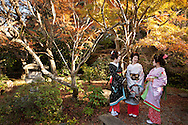Three trainee geisha, known as 'maiko' until they make their debut appearance, and who have been hired and are being trained by the local authorities, take a walk in Ryosen-ji shrine in Shimoda, Japan, on Wednesday 14th December 2011. .The three geisha are Awagiku (in white/silver kimono), Rinka (black kimono), Iroha (pink kimono). Their teachers are Nami (green kimono), Hanamaru (geisha in purple kimono) and their teacher of shamisen musical instrument is Chikako (wearing pink kimono, gold glasses)..The three trainee geisha were selected after applying for the positions which were advertised by Shimoda city council via the 'Hello Work' employment office. The Shimoda city council hope to keep the geisha tradition alive within their town by the appointment of the girls, and the girls will undertake geisha duties at local festivals and for tour groups and tourists.