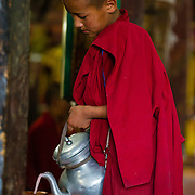 Young Buddhist monk pouring milk tea at a morning ceremony (puja) at Thiksey Monastery, Ladakh, India