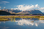 A majestic view of the snow-capped mountains behind Lake Tekapo behind a field of lupins.  New Zealand, of course!