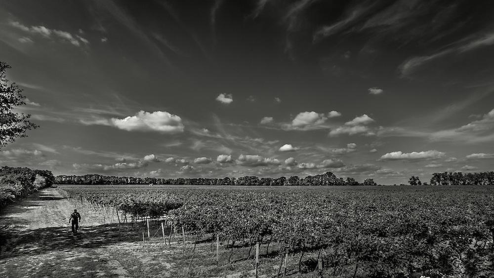 Country work and people behind Slovak wine ✭ Krajina, ľudia a práca za slovenským vínom