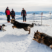 Play time with JHMR Ski Patrol avalanche rescue dogs.