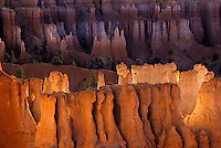 Hoodoos glow orange from the reflected light of sunrise in Bryce Canyon National Park, Utah.
