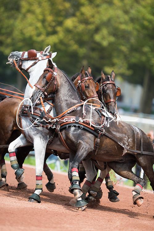 Jozsef Dobrovitz Jr, (HUN), Alandro, Bandidos, Conversano, Vivaldo, Wijsneus - Driving Marathon - Alltech FEI World Equestrian Games™ 2014 - Normandy, France.<br /> © Hippo Foto Team - Jon Stroud<br /> 06/09/2014