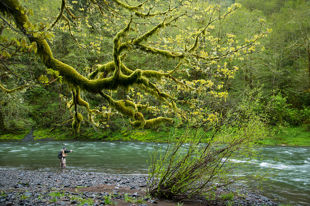 Fly fishing for steelhead on the Trask River near Tillamook, Oregon.