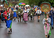 Cattle and their herders parade down the street in Maierhöfen, Germany, September 13 for the annual viehscheid. The bringing of livestock from high pastures to stable for the wintertime is an old custom, still practiced with gemutlichkeit in villages throughout the Alps.